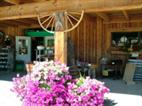Business After Hours at Gatzke's Farm Market - June
