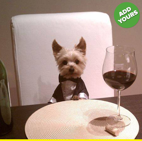 Look at this classy pup.